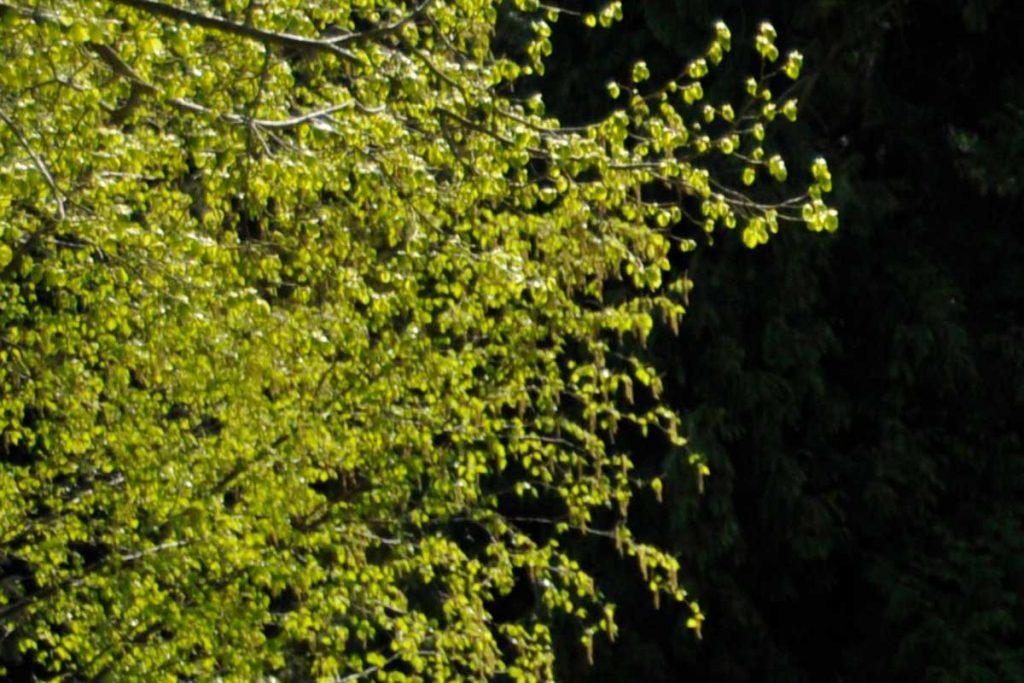 Baumbestattungsmöglichkeiten nahe Darmstadt bietet zum Beispiel der Ruheforst Erbach an