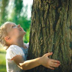 """""""Tree of Life"""": Ein Baum, in dem der Verstorbene weiterlebt …"""