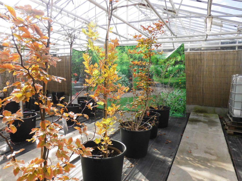 Baumplantage