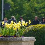 Gelbe Blumen vor Trauergemeinschaft vor Friedhofshalle